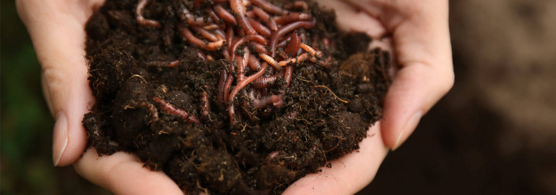 "Worms & water fleas: ""innovative wastewater treatment"" demonstrated in Scotland"