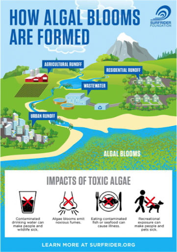 How algal blooms are formed